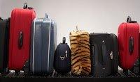 Malas na esteira de bagagem