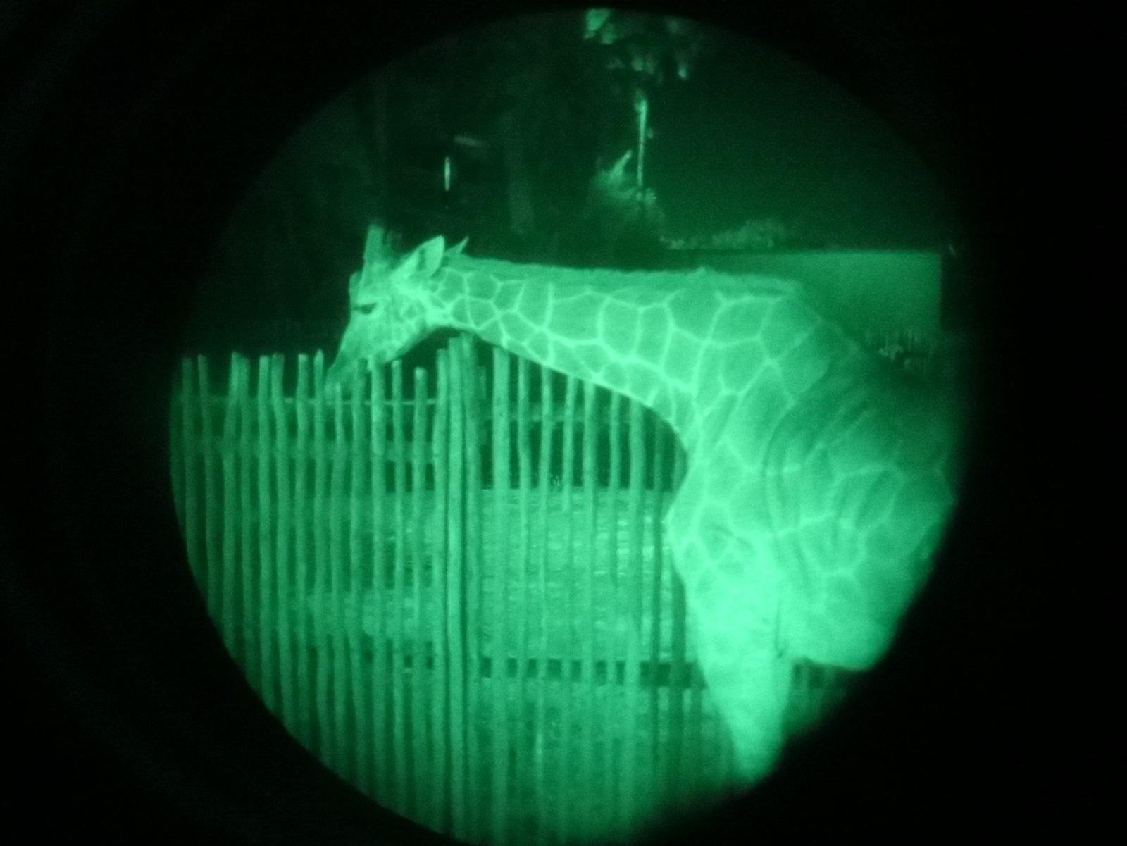 safari noturno